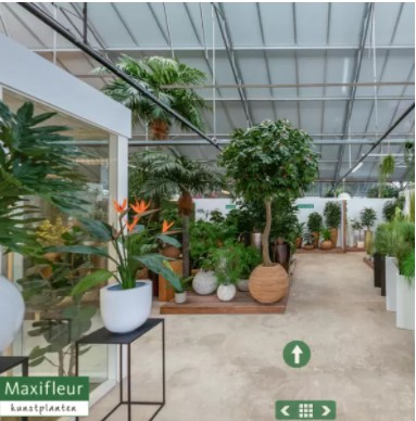 maxifleur planten
